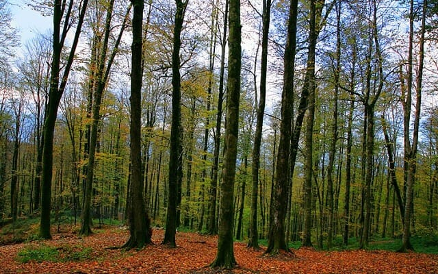 Nur Forest Park - Nur - Mazandaran - Caspian Sea Extension Iran Tour Highlight